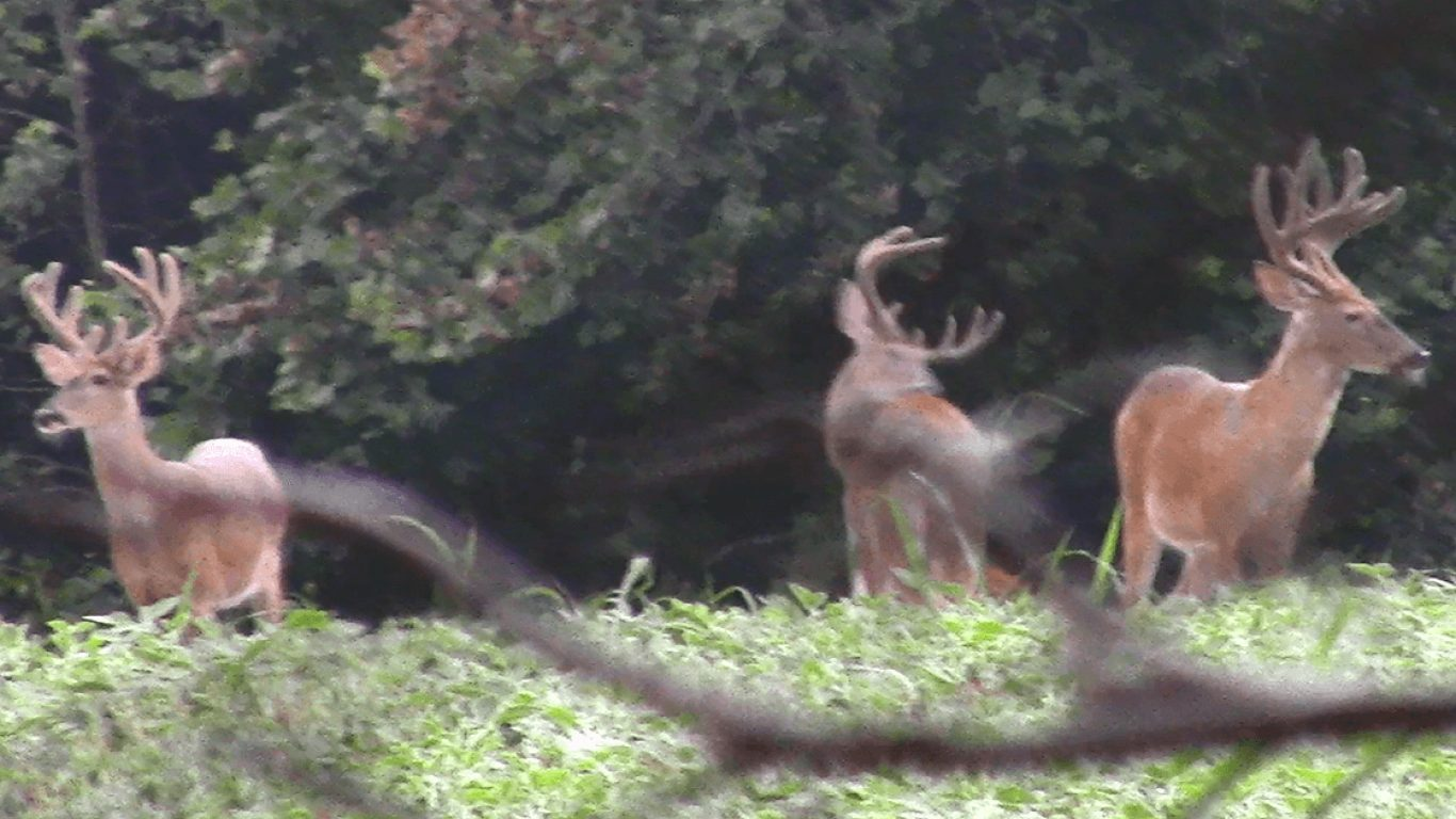 Summer Scouting: Target Specific Bucks