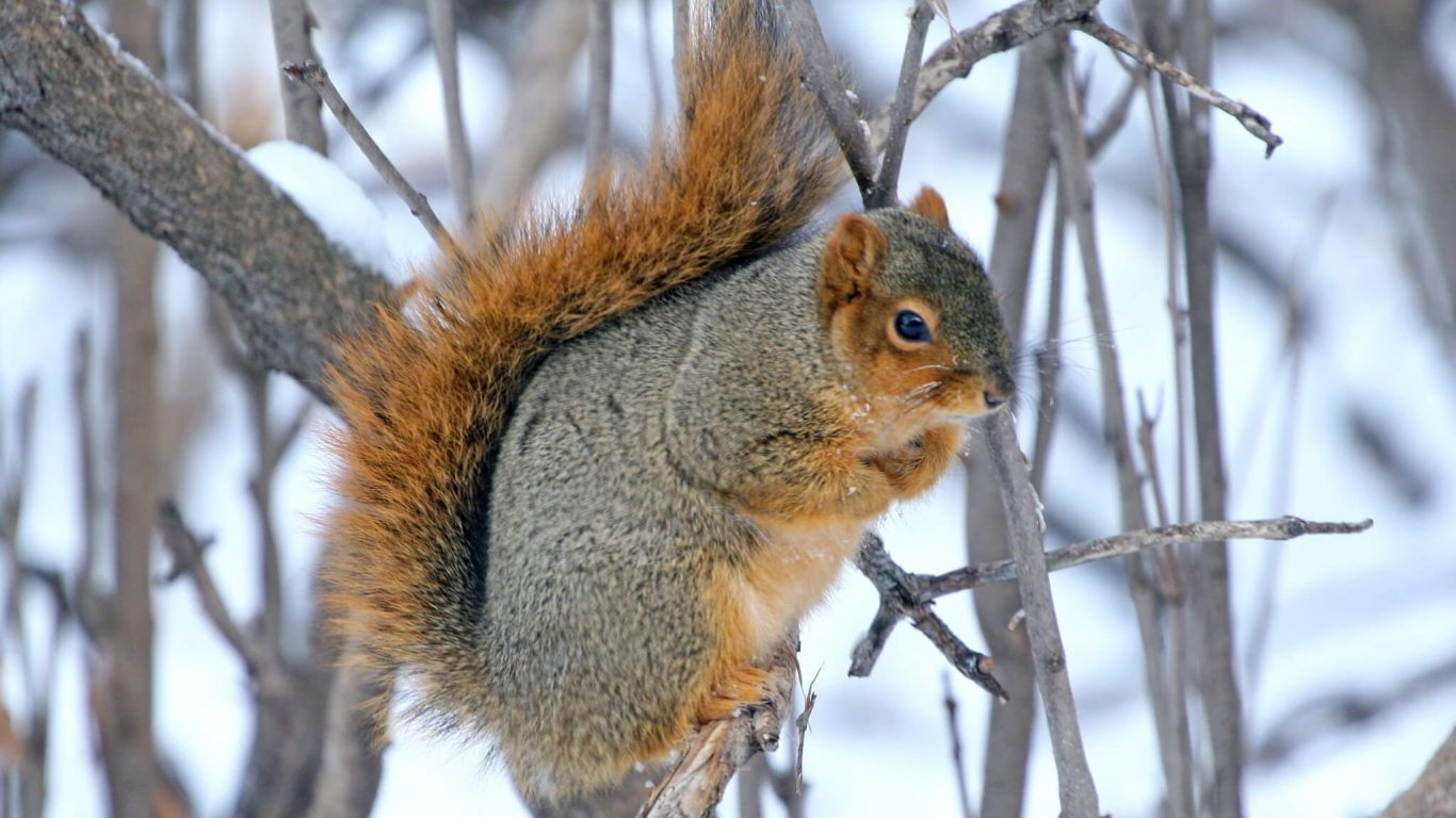 Tips for Great Winter Squirrel Hunting