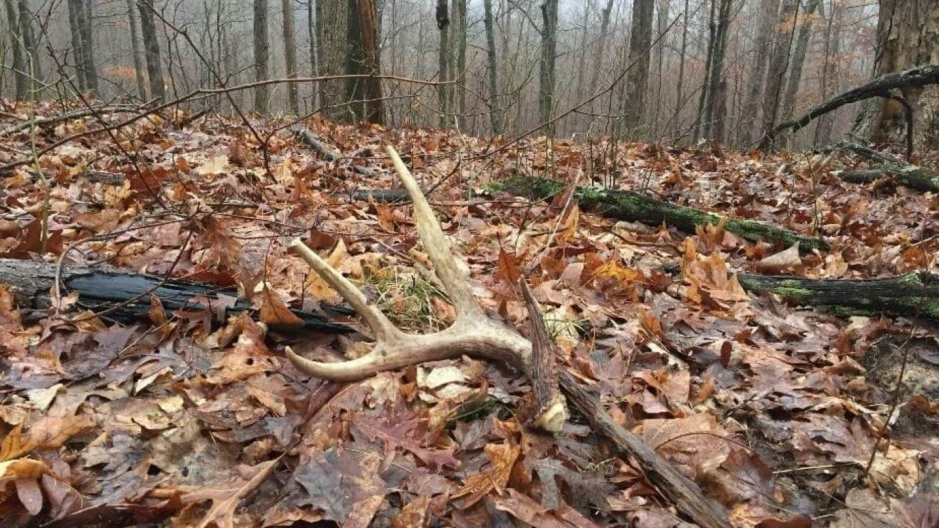 Late Winter Whitetail Scouting and Shed Hunting Tactics