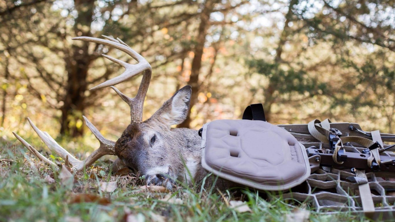 Quick Tips for Purchasing Hunting Property