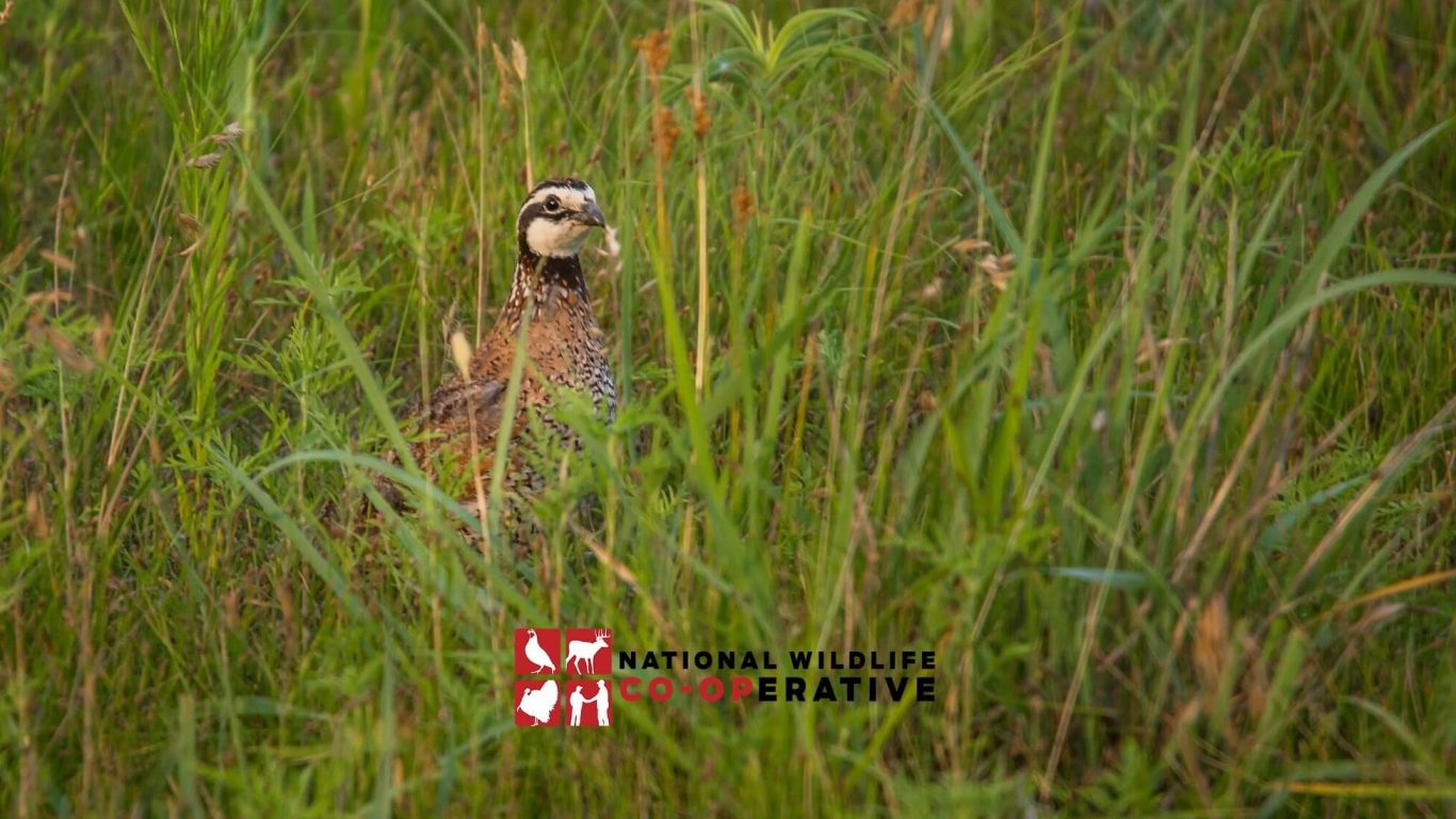Introducing the National Wildlife Cooperative