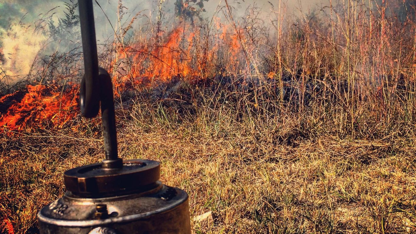 Evaluating the Results of Prescribed Fire