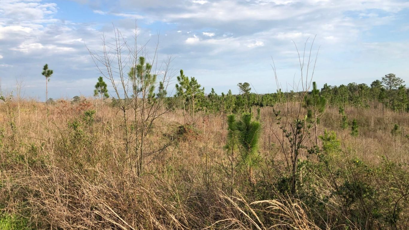 How To Increase Usable Space for Whitetail Deer