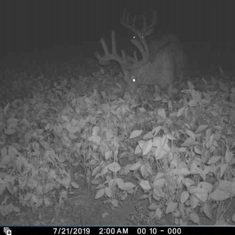 Arrowing Homegrown Bucks