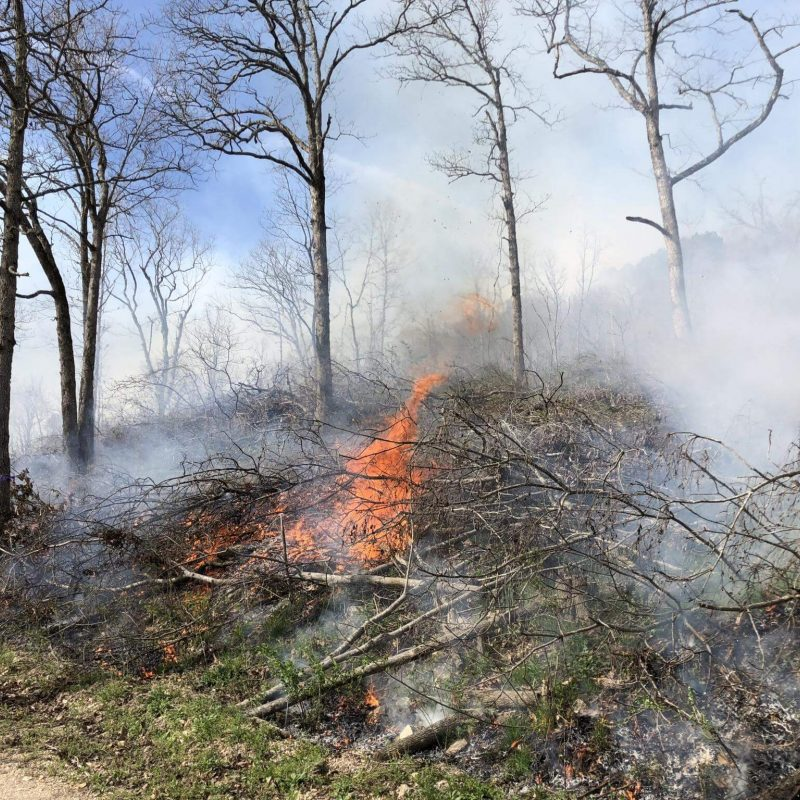Using Fire to Alter Plant Communities