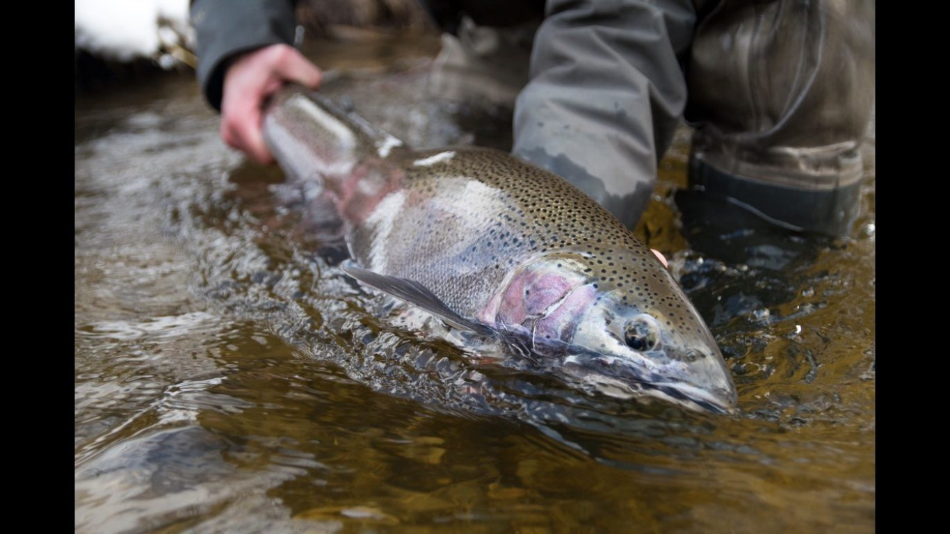 Steelhead Fishing 101 #2